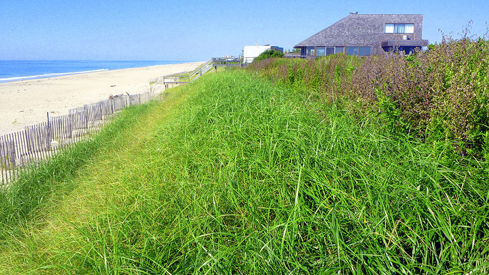 Dune Maintenance & Vegetation
