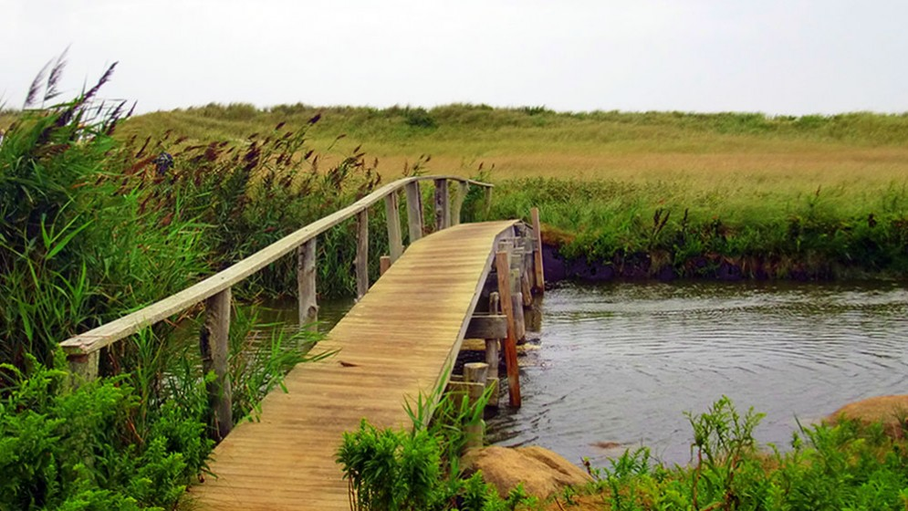 firstcoastal-wetland-14