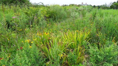 first coastal wetland restoration featured image